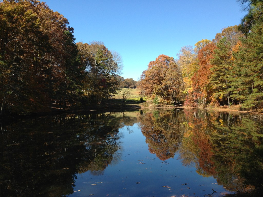 Fall view of a pond in Mabry Park
